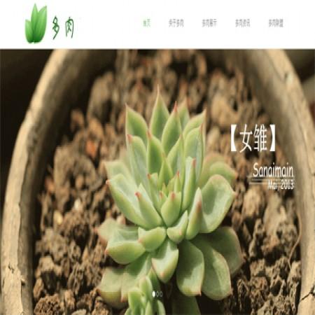 绿色多肉植物网站模板